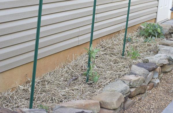 StackedStone Planted Garden