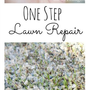 One Step Lawn Repair at theDIYvillage.com