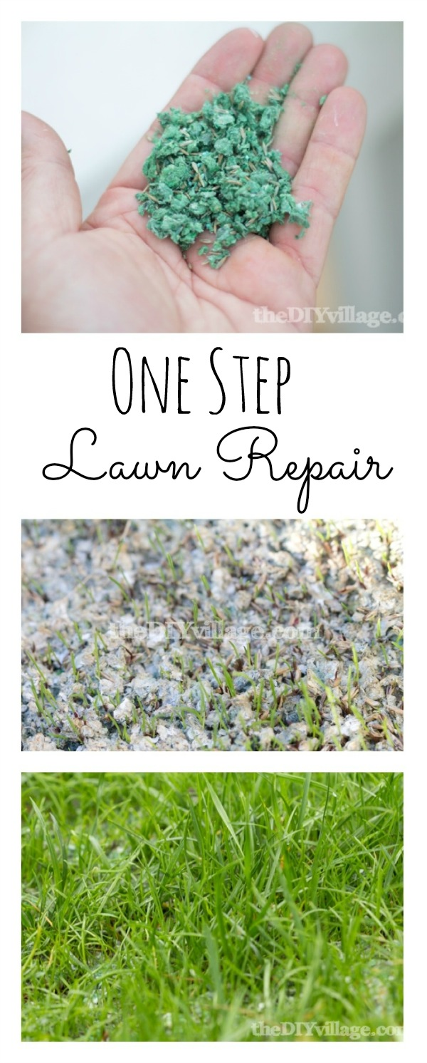 One Step Lawn Repair at theDIYvillage.com