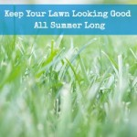 Keep Your Lawn Looking Good All Summer Long