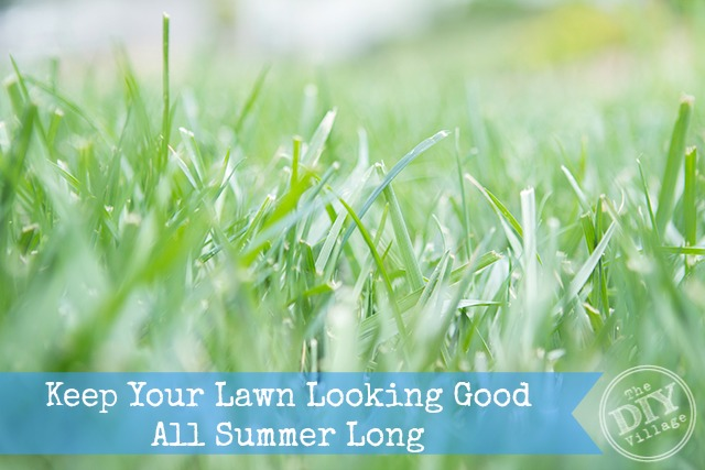 How to grow a healthy lawn