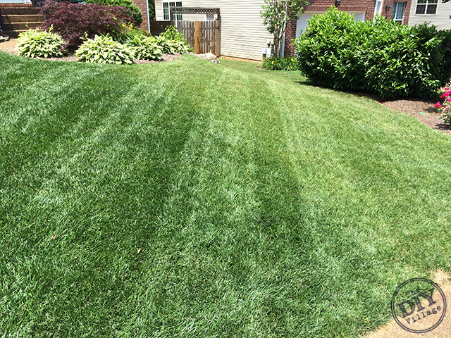 Sta Green Treated Lawn