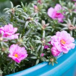 Using Container Gardens for Flowers & Fruit